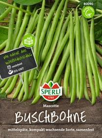 Buschbohne Mascotte Gemüsesamen Sperli 650180600000 Bild Nr. 1