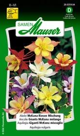 Akelei McKana Riesen Mischung Blumensamen Samen Mauser 650101101000 Inhalt 0.5 g (ca. 80 Pflanzen oder 4 - 5 m² ) Bild Nr. 1