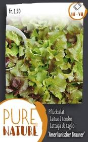 Lattuga de taglio 'Riccia rossa ameri. 5 Sementi di verdura Do it + Garden 287111000000 N. figura 1