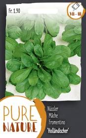 Nüssler 'Holländischer breitblät.' 5g Gemüsesamen Do it + Garden 287112400000 Bild Nr. 1