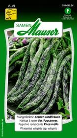 Stangenbohne Berner Landfrauen Gemüsesamen Samen Mauser 650115503000 Inhalt 80 g (ca. 20 Stangen oder 8 m²) Bild Nr. 1