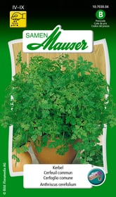 Cerfeuil commun Semences d'herbes arom. Samen Mauser 650111301000 Contenu 2.5 g (env. 2 - 3 m²) Photo no. 1