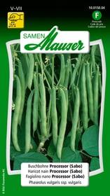 Buschbohne Processor (Sabo) Gemüsesamen Samen Mauser 650109304000 Inhalt 80 g (ca. 8 m² ) Bild Nr. 1