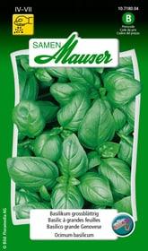 Basilikum grossblättrig Kräutersamen Samen Mauser 650108703000 Inhalt 2.5 g (ca. 100 Pflanzen oder 5m²) Bild Nr. 1
