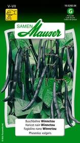 Buschbohne Winnetou Gemüsesamen Samen Mauser 650109308000 Inhalt 80 g (ca. 8 m² ) Bild Nr. 1