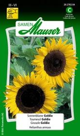 Girasole Goldie Sementi di fiori Samen Mauser 650104108000 Contenuto 2.5 g (ca. 40 - 60 piante o 6 m²) N. figura 1