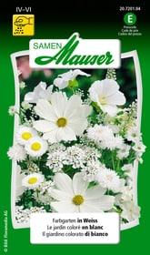 Farbgarten in Weiss Blumensamen Samen Mauser 650103703000 Inhalt 3 g (ca. 100 - 150 Pflanzen oder 3 - 4 m² ) Bild Nr. 1