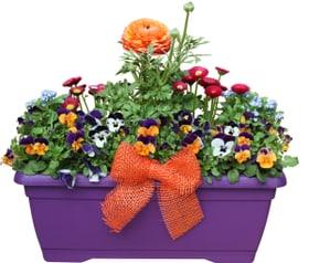boite de printemps colore