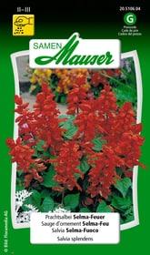 Prachtsalbei Selma-Feuer Blumensamen Samen Mauser 650107001000 Inhalt 0.75 g (ca. 80 Pflanzen oder 4 m²) Bild Nr. 1