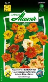 Kapuzinerkresse Bunte Juwelen Blumensamen Samen Mauser 650107803000 Inhalt 5 g (ca. 25 Pflanzen oder 3 m² ) Bild Nr. 1