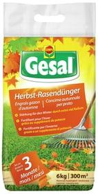 Herbst-Rasendünger, 6 kg Rasendünger Compo Gesal 658240400000 Bild Nr. 1