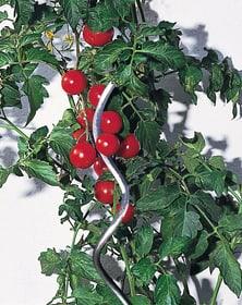 Spirale per pomodori Supporto delle piante Windhager 631515400000 N. figura 1