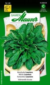 Nüsslisalat Louviers Gemüsesamen Samen Mauser 650112805000 Inhalt 5 g (ca. 1 - 2 m² ) Bild Nr. 1