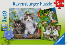 Chatons tigrés Puzzle Ravensburger 748976800000 Photo no. 1