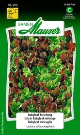 Babyleaf Mischung Gemüsesamen Samen Mauser 650113301000 Inhalt 2.5 g (ca. 3 - 5 m² ) Bild Nr. 1
