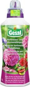 Hortensien- und Azaleendünger, 1 l Flüssigdünger Compo Gesal 658229500000 Bild Nr. 1