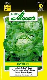 Kopfsalat Selma®-Kopsa Gemüsesamen Samen Mauser 650111504000 Inhalt 0.5 g (ca. 1000 Pflanzen oder 5 - 7 m² ) Bild Nr. 1