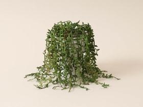 Pianta succulente Pianta artificiale 657782400000 N. figura 1