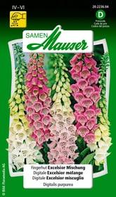 Fingerhut Excelsior Mischung Blumensamen Samen Mauser 650103201000 Inhalt 0.5 g (ca. 100  Pflanzen oder 5 m² ) Bild Nr. 1