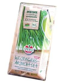 Bio Weizen Starter Set Sprossen & Keimlinge Sperli 650151700000 Bild Nr. 1