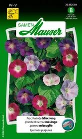 Prachtwinde Mischung Blumensamen Samen Mauser 650104301000 Inhalt 2.5 g (ca. 30  Pflanzen oder 1 - 2 m²) Bild Nr. 1
