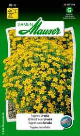 Tagetes Ursula Blumensamen Samen Mauser 650107511000 Inhalt 1 g (ca. 80 Pflanzen oder 5 - 6 m²) Bild Nr. 1