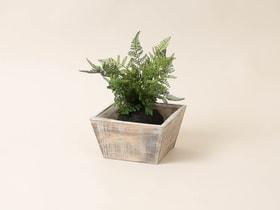 Caisse en bois Pot Do it + Garden 656549200001 Taille L: 20.0 cm x P: 20.0 cm x H: 11.0 cm Photo no. 1