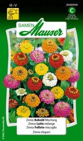 Zinnia Folletto miscuglio Sementi di fiori Samen Mauser 650108406000 Contenuto 1 g (ca. 50 piante o 3 - 4 m²) N. figura 1