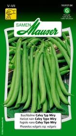 Buschbohne Calvy Typ Miry Gemüsesamen Samen Mauser 650109303000 Inhalt 80 g (ca. 8 m² ) Bild Nr. 1