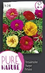 Portulaca, miscuglio doppio 0.75g Sementi di fiori Do it + Garden 287303800000 N. figura 1