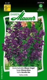 Buntschopfsalbei Blauer Vogel Blumensamen Samen Mauser 650107002000 Inhalt 100 Korn (ca. 70 Pflanzen oder 4 m²) Bild Nr. 1