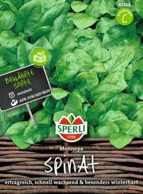 Spinat Monnopa Gemüsesamen Sperli 650155300000 Bild Nr. 1
