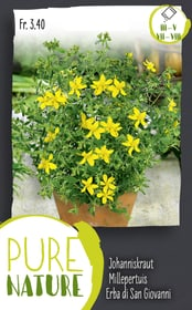 Johanniskraut Hypericum perforatum 0.5g Kräutersamen Do it + Garden 287120400000 Bild Nr. 1