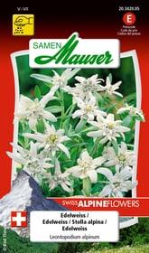 Edelweiss Blumensamen Samen Mauser 650103301000 Inhalt 0.05 g  Bild Nr. 1
