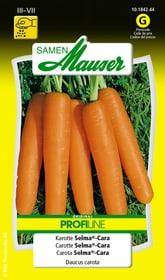 Karotte Selma®-Cara Gemüsesamen Samen Mauser 650110908000 Inhalt 2.5 g (ca. 150 - 300 Pflanzen oder 3 - 4 m²) Bild Nr. 1