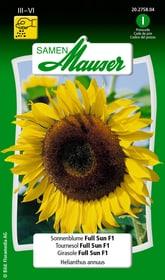 Girasole Full Sun F1 Sementi di fiori Samen Mauser 650104107000 Contenuto 30 semi (ca. 25 piante o 2 - 3 m²) N. figura 1