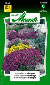 Piante tappezzanti miscugliio Sementi di fiori Samen Mauser 650107401000 Contenuto 0.5 g (ca. 70 piante o 3 - 4 m²) N. figura 1