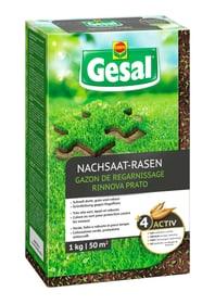 Nachsaat-Rasen, 1 kg Rasensamen Compo Gesal 659211700000 Bild Nr. 1