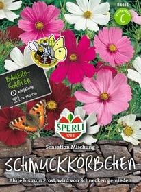 Schmuckkörbchen Sensations Mischung Sementi di fiori Sperli 650176600000 N. figura 1