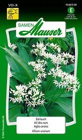 Aglio orsino Sementi di erbe Samen Mauser 650119902000 Contenuto 1 g (ca. 100 piante o 2-3 m²) N. figura 1