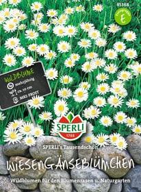 Wiesengänseblümchen Semences de fleurs Sperli 650176200000 Photo no. 1