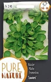 Nüssler Feldsalat 'Louviers' 5g Gemüsesamen Do it + Garden 287112600000 Bild Nr. 1
