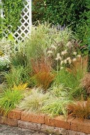 Carex Mix 12cm