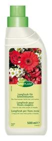 Longfresh für Schnittblumen Flüssigdünger Mioplant 658203400000 Bild Nr. 1