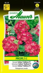 Geranie Selma®-Balkon F1 Blumensamen Samen Mauser 650106101000 Inhalt 0.1 g (ca. 15 Pflanzen) Bild Nr. 1