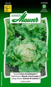 Eissalat Grazer Krauthäuptl 2 Gemüsesamen Samen Mauser 650110001000 Inhalt 1 g (ca. 400 Pflanzen oder 4 m² ) Bild Nr. 1