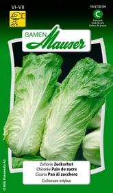 Zichorie Zuckerhut Gemüsesamen Samen Mauser 650116407000 Inhalt 5 g (ca. 100 Pflanzen oder 5 m²) Bild Nr. 1