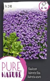 Aubrietia o Cuscinetto azzuro, nano 0.5g Sementi di fiori Do it + Garden 287305300000 N. figura 1