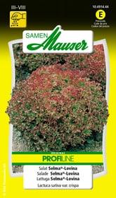 Lattuga Selma®-Lovina Sementi di verdura Samen Mauser 650112201000 Contenuto 1 g (ca. 20 - 30 m²) N. figura 1