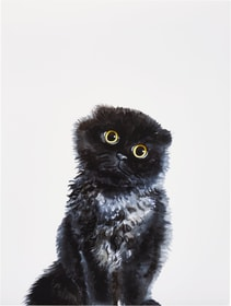 CAT Poster 431842000000 Photo no. 1